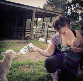 Feeding a lamb a bottle whilst also breastfeeding Jai #feedallthebabies